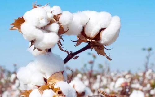 棉花期货波动受哪些因素影响?棉花